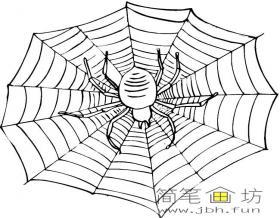蜘蛛网上的蜘蛛简笔画图片