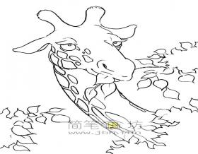 吃树叶的长颈鹿简笔画