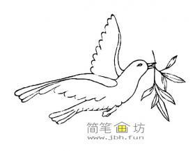 儿童简笔画:和平鸽图片