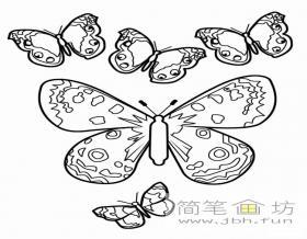 花蝴蝶简笔画图片大全