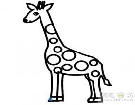 简笔画:长颈鹿图片