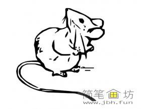 儿童简笔画老鼠的画法图片