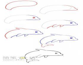 一步步教你画海豚简笔画