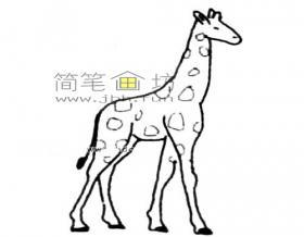 简单的长颈鹿简笔画绘画步骤