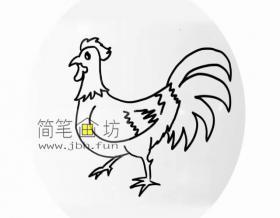 图解大公鸡的绘画步骤