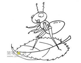 树叶上的蚂蚁的简笔画图片