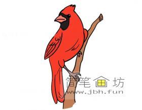 红雀的简笔画图片2幅