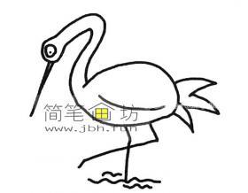 美丽的丹顶鹤的简笔画图片大全