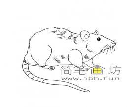 彩色长尾巴的小老鼠的简笔画图片2幅