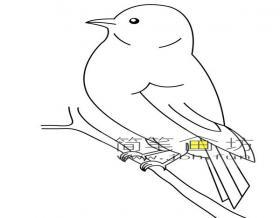 小鸟简笔画素材