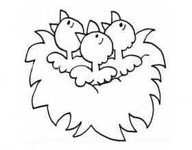 鸟窝里的小鸟简笔画