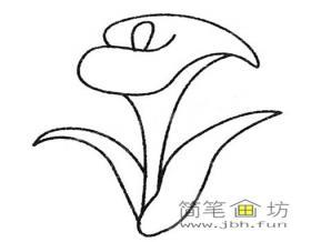简笔画花卉_各种马蹄莲的画法及图片大全