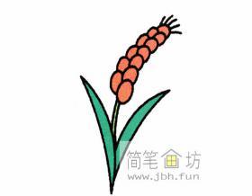 麦穗的简笔画教程