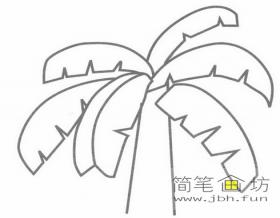 椰树的简笔画图片详解