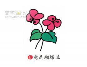 简笔画蝴蝶兰的画法步骤教程【彩色】