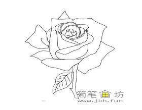 美丽的玫瑰花的素材大全
