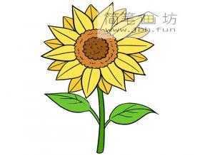 向日葵的简笔画图片