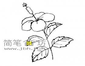 简单的步骤教你画木槿花的简笔画