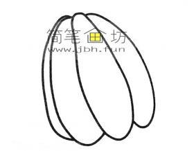 多种杨桃的简笔画图片