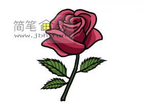 漂亮的红玫瑰的简笔画图片