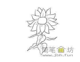 太阳花的简笔画1幅