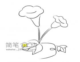 喇叭花的简笔画素材1幅