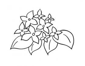 漂亮的花朵简笔画图片