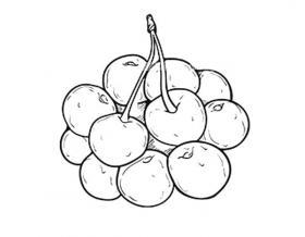 一串樱桃简笔画图片