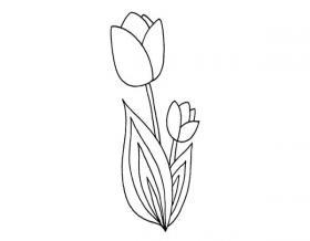 花卉简笔画_郁金香的简笔画画法教程
