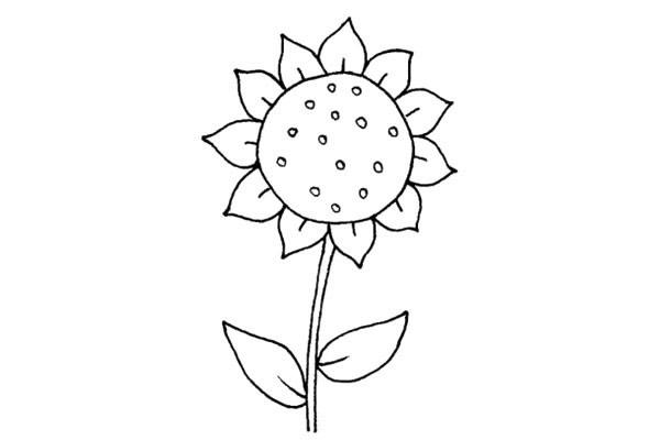 简单好看的儿童简笔画太阳花的画法步骤教程(6)