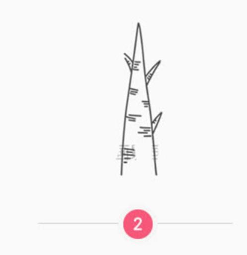简笔画小白杨的画法(3)