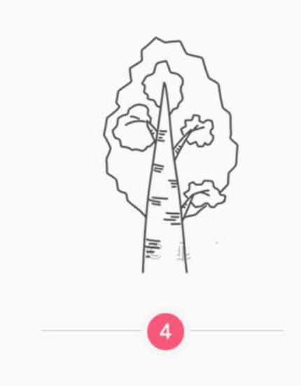 简笔画小白杨的画法(5)