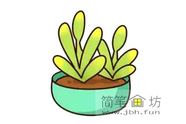 多肉植物的简笔画画法教程【彩色】(6)