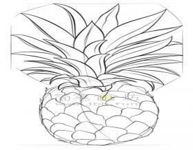菠萝简笔画教程【彩色】