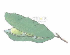 简单4步学会画豆角简笔画【彩色】