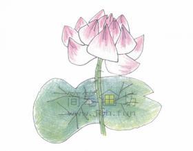 简单几步学绘画美丽的荷花简笔画【彩色】