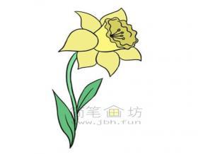 儿童简笔画:黄色水仙花简笔画画法【彩色】