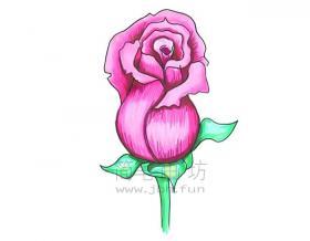 简单几步学会画美丽的玫瑰简笔画【彩色】