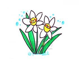 好看的水仙花简笔画画法【彩色】