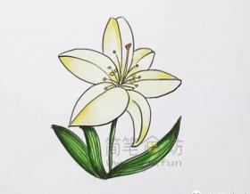 高雅的兰花简笔画绘画步骤【彩色】
