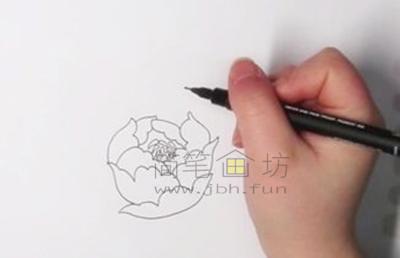 教你画一朵美丽的牡丹花【彩色】(1)