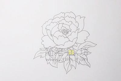 教你画一朵美丽的牡丹花【彩色】(3)