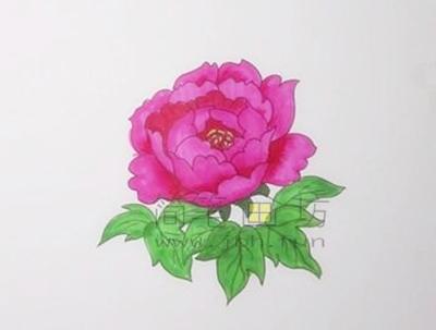 教你画一朵美丽的牡丹花【彩色】(5)