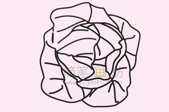 甘蓝简笔画绘画步骤(3)
