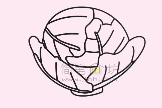 甘蓝简笔画绘画步骤(5)
